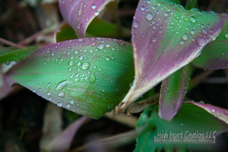 Picture a Day #120, 5-27-13 | Janesville Photographer